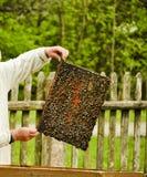 Hombre rural que cuida para las abejas apicultura fotos de archivo