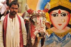 Hombre santo con la vaca Imagenes de archivo