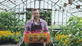 Hombre sonriente feliz en el delantal que sostiene la caja con las flores que camina en su invernadero imágenes de archivo libres de regalías