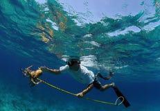 Hombre spearfishing para la langosta Fotos de archivo