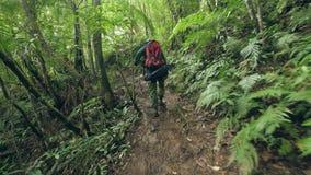 Hombre turístico con la mochila que camina en la trayectoria en la opinión trasera del bosque tropical Hombre que viaja que cam almacen de video