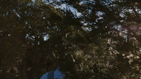 Hombre turístico joven activo feliz de la cámara lenta que camina con la mochila entre árboles forestales y arbustos soleados her almacen de video