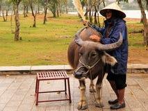 Hombre y búfalo Foto de archivo libre de regalías