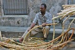 Hombre y caña de azúcar en la isla de Zanzíbar Imagen de archivo