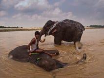 Hombre y dos elefantes asiáticos que se bañan en el río Imagen de archivo
