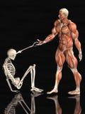 Hombre y esqueleto anatómicos Imágenes de archivo libres de regalías