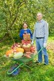 Hombre y mujer con la cosecha de verduras Imagen de archivo