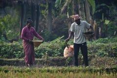 Hombre y mujer de Tharu que derraman las semillas en campos Imagenes de archivo