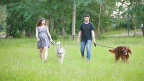 Hombre y mujer - par de la familia con los perros de animales domésticos que caminan en parque - setter irlandés y perro esquimal almacen de video