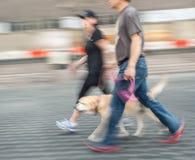 Hombre y mujer que caminan con un perro Imagen de archivo libre de regalías