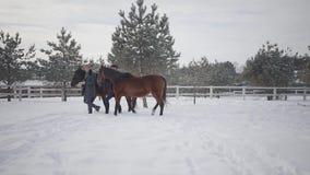 Hombre y mujer que llevan dos caballos marrones que hablan en el rancho del invierno de la nieve Pares positivos felices pasar ti almacen de video