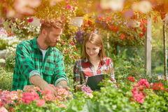 Hombre y mujer que trabajan con las flores del jardín Foto de archivo