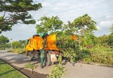 Hombre y mujeres que trabajan para cortar y para mover el árbol después de reducido, Edito Fotos de archivo