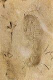 Hombre y naturaleza: rastros de pie del ` s del pájaro y de un pie humano en la arena amarilla Imagenes de archivo