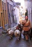 Hombre y ovejas en la calle Fotos de archivo libres de regalías