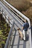 Hombre y perro en paseo marítimo en humedal Fotos de archivo libres de regalías