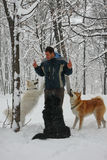 Hombre y perros en la nieve Imagenes de archivo