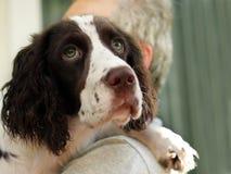 Hombre y su perro Foto de archivo libre de regalías