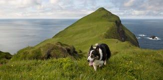 Hombre y sus perros que van de excursión en Mykines Fotografía de archivo