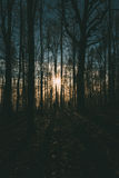 Hombres en bosque en el amanecer Imagen de archivo libre de regalías