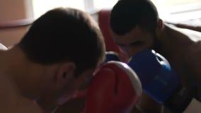 Hombres jovenes juguetones que entrenan a las habilidades del boxeo, partido de entrenamiento en el anillo, deporte del combate almacen de video