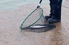 Hombres que pescan para los pequeños salmones de coho de la primavera Imagenes de archivo