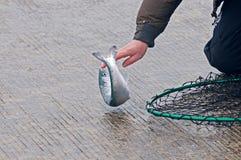 Hombres que pescan para los pequeños salmones de coho de la primavera Imagen de archivo libre de regalías