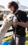 Hombres y alpaca blanca Foto de archivo