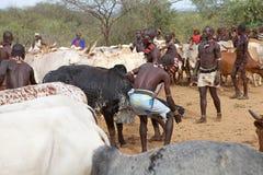 Hombres y ganado africanos Imagenes de archivo