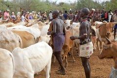 Hombres y ganado africanos Fotos de archivo libres de regalías
