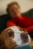 At home. A dog looking with surprise and waiting for daily food Royalty Free Stock Image