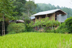 Home adjacent rice fields Stock Photo