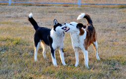 Home animals. Play greater role in lifes of the person Royalty Free Stock Images