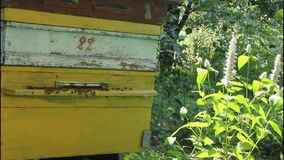 Home apiary Stock Photography