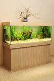 Home aquarium Royalty Free Stock Image