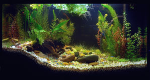 Home Aquarium. Planted home fish tank with curved substrate Royalty Free Stock Photo
