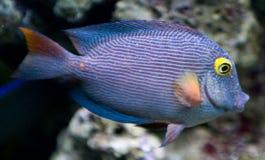 Home aquarium Stock Photo