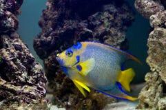 Home aquarium Stock Photography