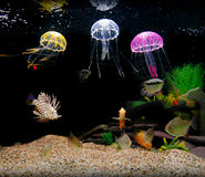 Home aquarium tank. With fish and ornamental jellyfish royalty free stock photo