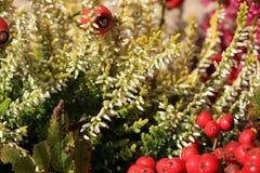 Heathers autumn flowers Stock Photo