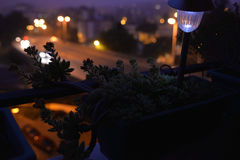 Succulent Plants, Flowers, Night Scene, Home Balcony Blossom Silhouettes, Garden Lamp. Succulent Plant, Crassula Mesembryanthemoides family, with small orange stock photos