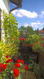 Home balcony in summer, spices, herbs, flowers Stock Photos