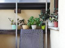 Home balkony garden
