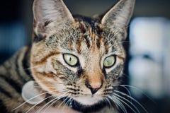 home barn för katt Royaltyfri Bild