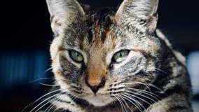 home barn för katt Royaltyfri Foto