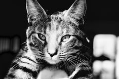 home barn för katt Royaltyfria Bilder
