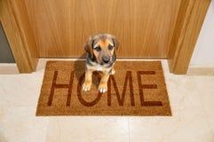 HOME bem-vinda do cão foto de stock