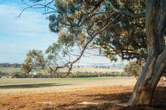 Home beyond the Gumtrees Royalty Free Stock Image