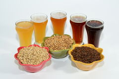 Home brew ingredients of grain and hops. Home brew beer ingredients with varying colors of malted barley grain to illustrate different grains in beer recipes Royalty Free Stock Image
