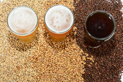 Home brew ingredients of grain and hops. Home brew beer ingredients with varying colors of malted barley grain to illustrate different grains in beer recipes Royalty Free Stock Photos